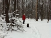 Прогулки по лесу — Полезно для здоровья и души!