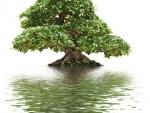 Бонсай — идеальное средство для медитации