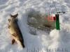 Зимняя рыбалка с удовольствием