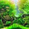 Как создать природный аквариум «тропического» леса