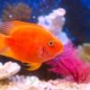 Рекомендации по уходу за домашним аквариумом