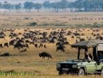 Африканское сафари: незабываемое путешествие