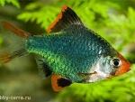 Выбор обитателей для аквариума