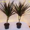 Комнатные растения, которые не требовательны в уходе.