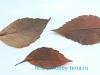Мышки из листьев – осенняя поделка