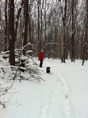 прогулки-по-лесу-полезно-для-здоровья-и-души