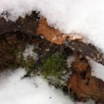 трава-под-снегом