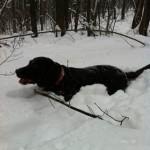 в-лесу-с-собакой