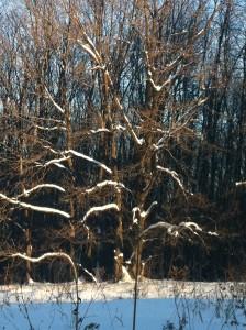 деревья-греются-на-солнце