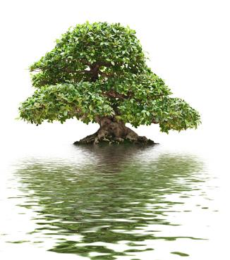 Бонсай-идеальное-средство-для-медитации-фикус