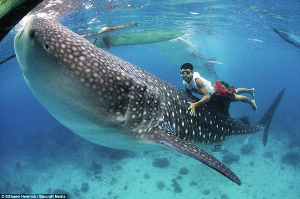 Необычные-хобби-Плавание-с-акулами