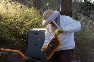 увлечение-пчеловодством-в-Германии