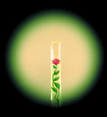 Микроминиатюра-Сядристого-Роза-в-волосе