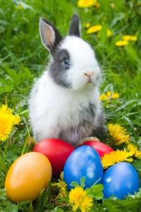 Пасхальный-кролик