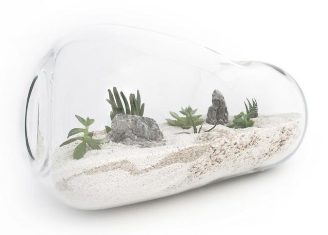 Чудо-в-бутылке-или-как-сделать-террариум-для-растений-своими-руками