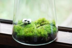 террариум-для-растений