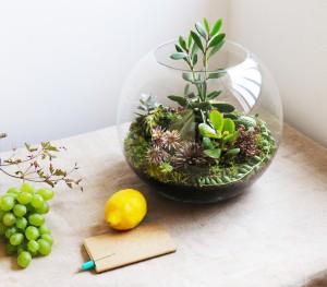 террарийм-для-растений