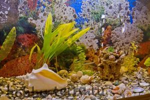 обустройство-аквариума