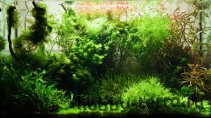 обустройство-аквариума-дома