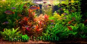 заселение-акваруима