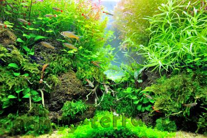 Как создать природный аквариум тропического леса