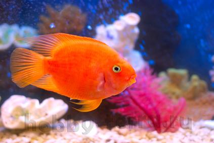 Рекомендации-по-уходу-за-домашним-аквариумом