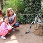 Зоопарк дети