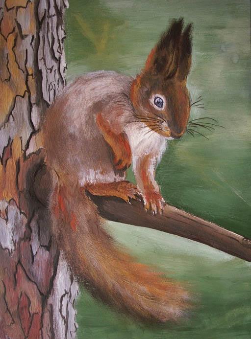 белочка на дереве - рисунок