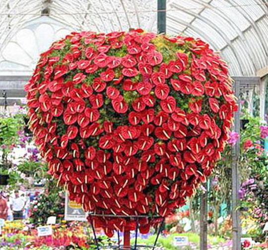Сердце из цветов антуриума
