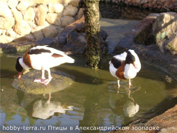 Птицы в Александрийском зоопарке