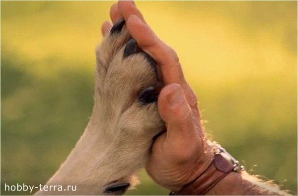 собаководство