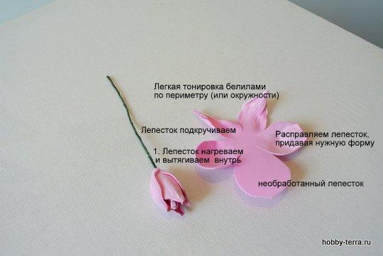DSC_1614