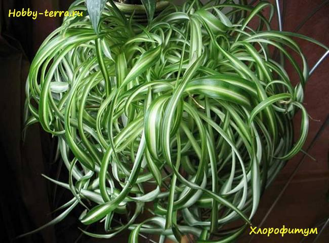 комнатные растения которые не требовательны в уходе